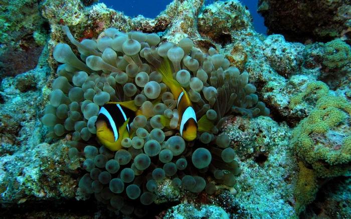 cda80d897a_podvodnii-mir-hurgada-egipet